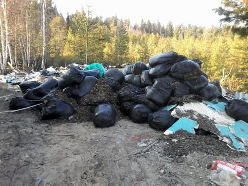 Мешки с листьями выкинутые вместе с мусором в дачном товариществе