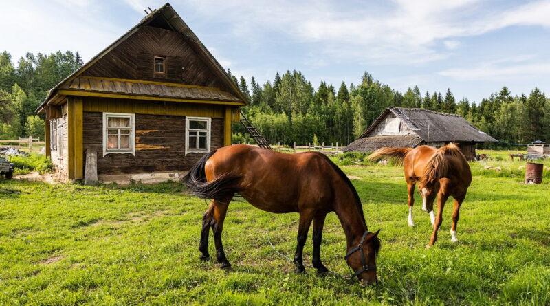 Лошади на подворье