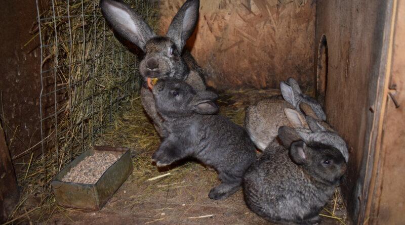 Кроличья банда