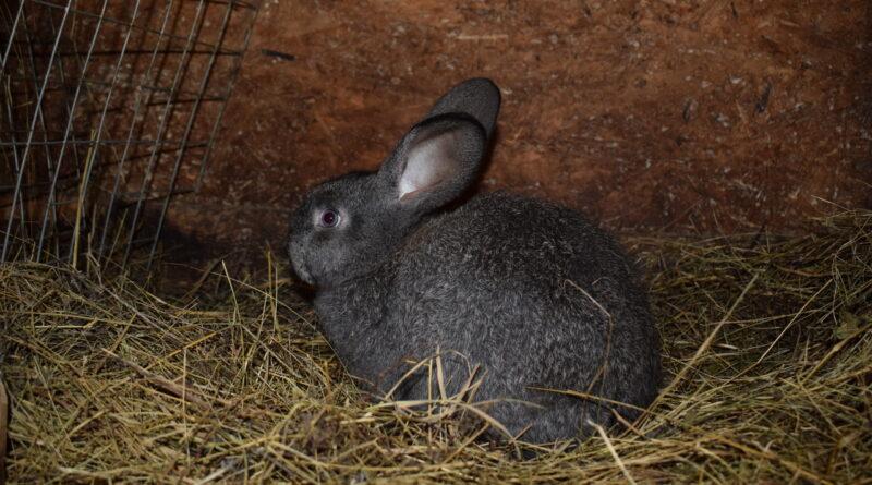 Лечение крольчонка