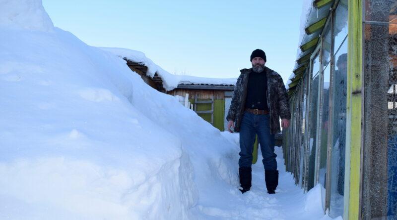 Снежные сугробы на подворье