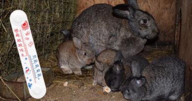 Температура в крольчатнике