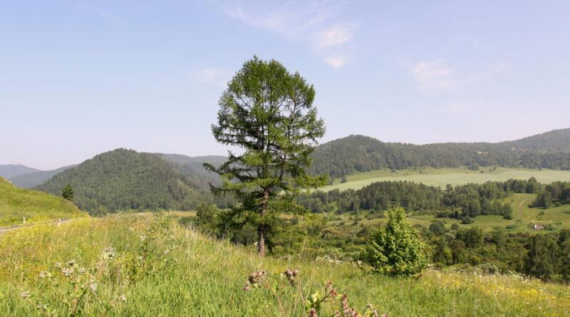 Одинокое дерево на фоне гор