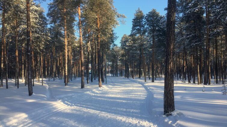 Домики лыжной базы