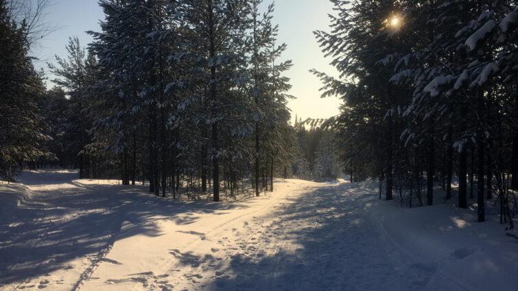 Множество дорог в лесу от снегоходов